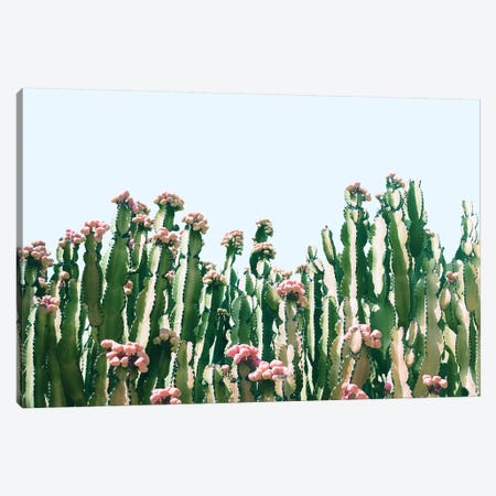 Cactus Blush Canvas Print #UMA82} by 83 Oranges Canvas Art Print