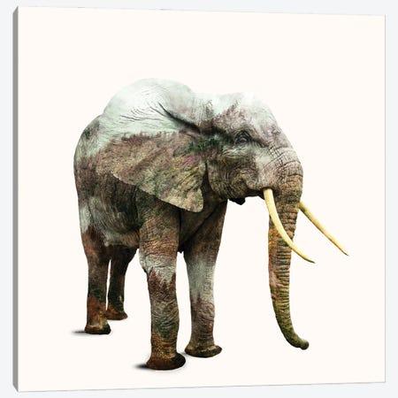 Elephant Transformation Canvas Print #UMA954} by 83 Oranges Canvas Art