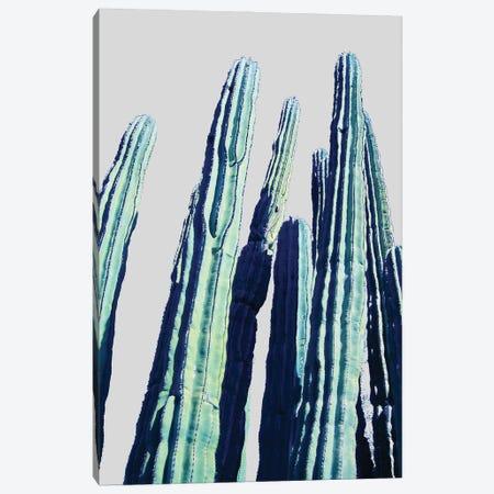 Cactus Canvas Print #UMA990} by 83 Oranges Canvas Art Print