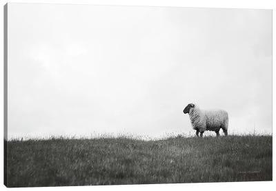 Islay Sheep II Canvas Art Print