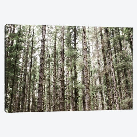 Mossy Pines Canvas Print #URA106} by Laura Marshall Canvas Artwork