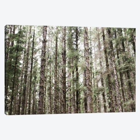 Mossy Pines Canvas Print #URA106} by Laura Marshall Canvas Artwork