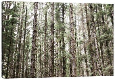 Mossy Pines Canvas Art Print