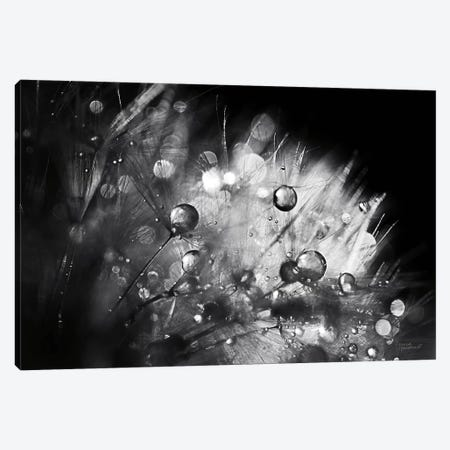 Dandelion Abstract I Canvas Print #URA127} by Laura Marshall Canvas Artwork