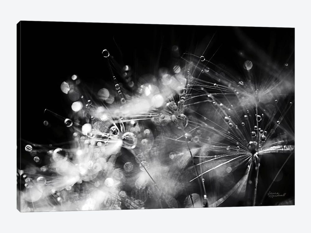 Dandelion Abstract II by Laura Marshall 1-piece Canvas Art Print