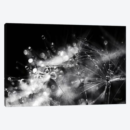 Dandelion Abstract II Canvas Print #URA128} by Laura Marshall Art Print