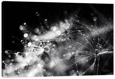Dandelion Abstract II Canvas Art Print