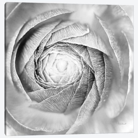 Ranunculus Abstract I BW Light Canvas Print #URA34} by Laura Marshall Canvas Art