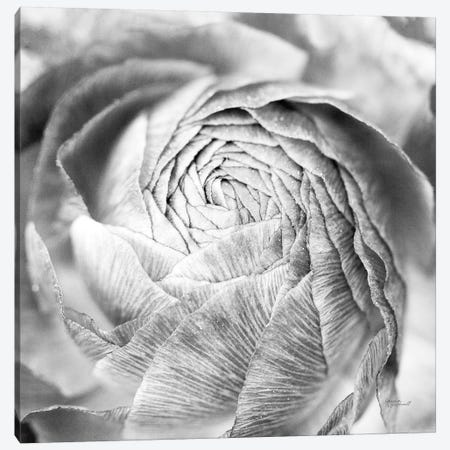Ranunculus Abstract II BW Light Canvas Print #URA35} by Laura Marshall Canvas Wall Art