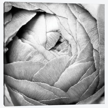 Ranunculus Abstract III BW Light Canvas Print #URA36} by Laura Marshall Canvas Artwork