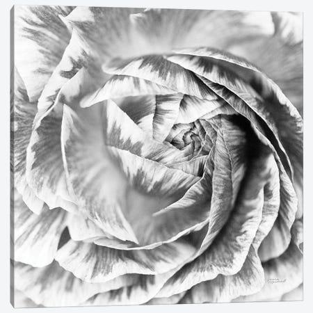 Ranunculus Abstract IV BW Light Canvas Print #URA37} by Laura Marshall Canvas Artwork