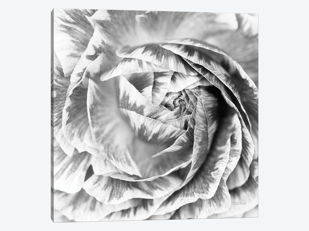 Ranunculus Abstract IV BW Light by Laura Marshall 1-piece Canvas Art