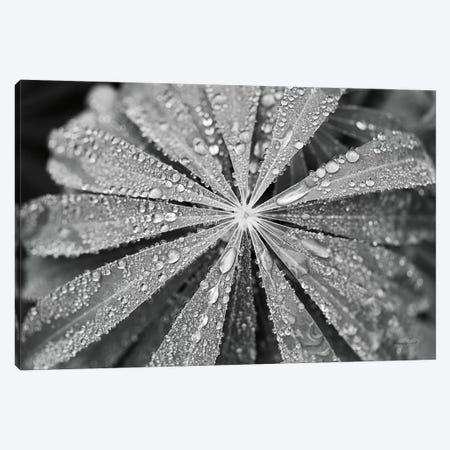Raindrops on Lupine Canvas Print #URA39} by Laura Marshall Canvas Art Print