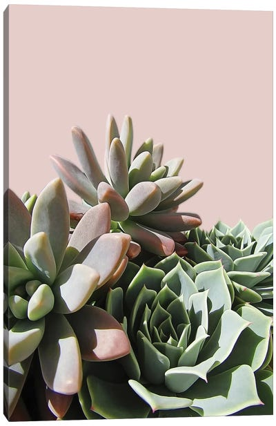 Pink Green Succulents Canvas Art Print