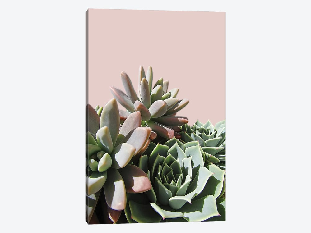 Pink Green Succulents by Urban Epiphany 1-piece Canvas Print