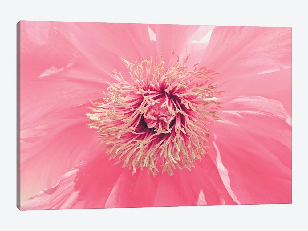 Pink Peony French Macaroon by Urban Epiphany 1-piece Canvas Wall Art