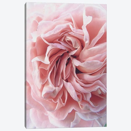 Rose 3-Piece Canvas #URE191} by Urban Epiphany Canvas Print
