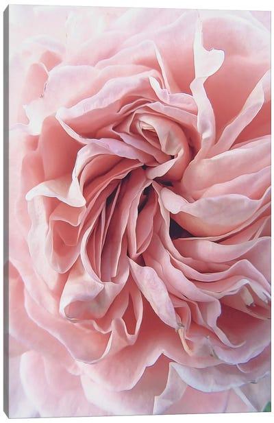 Rose Canvas Art Print