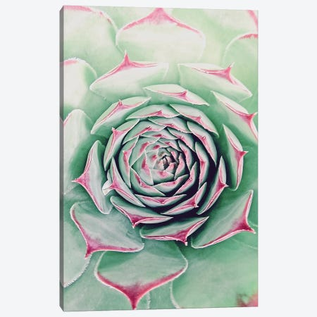 Succulent Red Tips Canvas Print #URE219} by Urban Epiphany Canvas Artwork