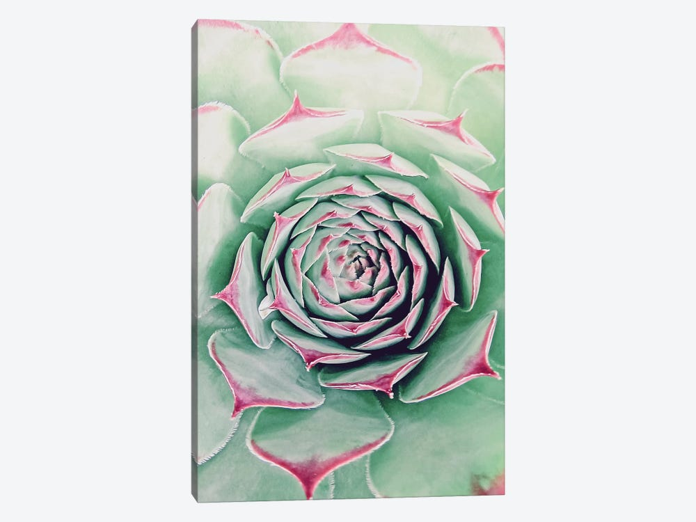 Succulent Red Tips by Urban Epiphany 1-piece Canvas Print