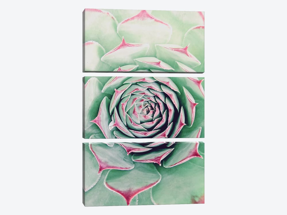 Succulent Red Tips by Urban Epiphany 3-piece Canvas Print
