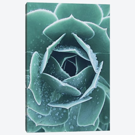 Succulent With Dew I Canvas Print #URE220} by Urban Epiphany Art Print