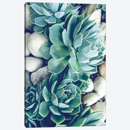 Succulents  Canvas Print #URE221} by Urban Epiphany Canvas Print