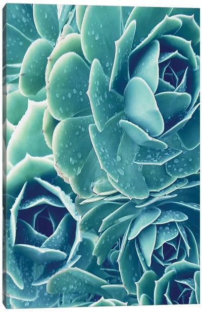 Succulents With Dew II Canvas Art Print
