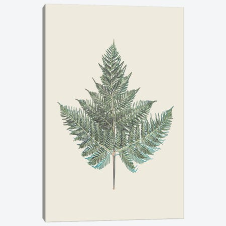Tender Fern Canvas Print #URE229} by Urban Epiphany Canvas Print