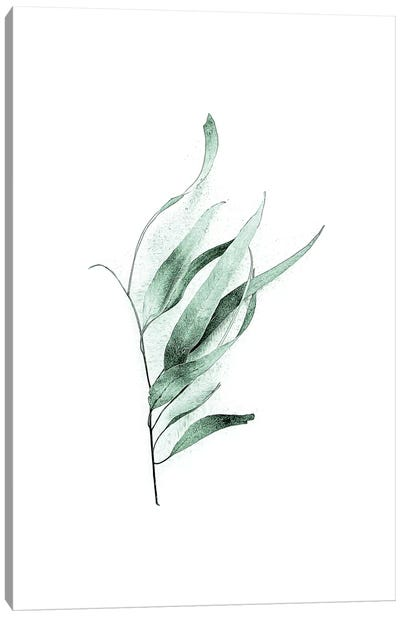 Tender Leaves II Canvas Art Print