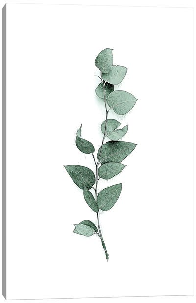 Tender Leaves III Canvas Art Print