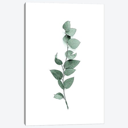 Tender Leaves III Canvas Print #URE232} by Urban Epiphany Canvas Wall Art