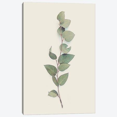 Tiny Branch Canvas Print #URE233} by Urban Epiphany Canvas Art