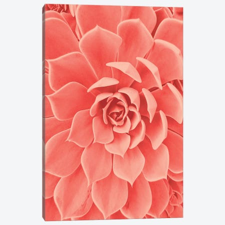Coral Succulent Canvas Print #URE54} by Urban Epiphany Canvas Wall Art