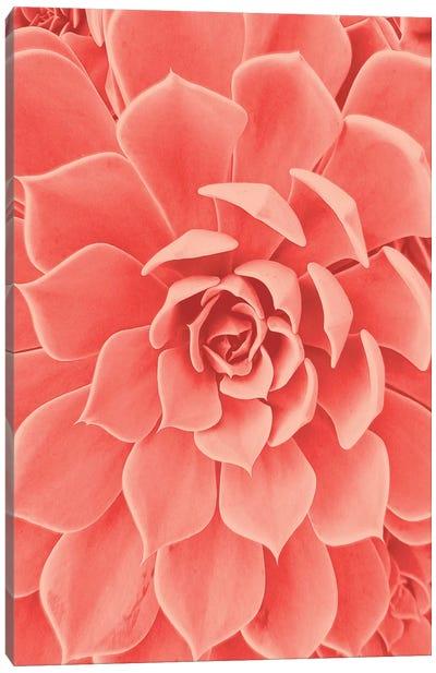Coral Succulent Canvas Art Print