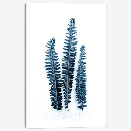 Fern Fronds Baltic Sea  Canvas Print #URE68} by Urban Epiphany Canvas Art