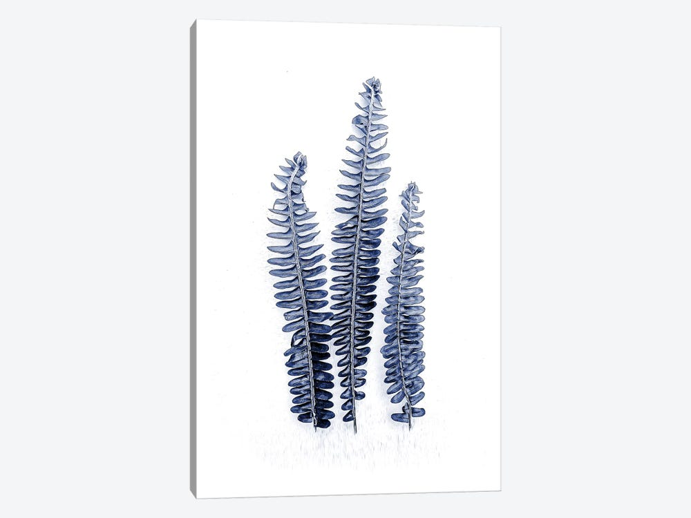 Fern Fronds Navy by Urban Epiphany 1-piece Canvas Artwork
