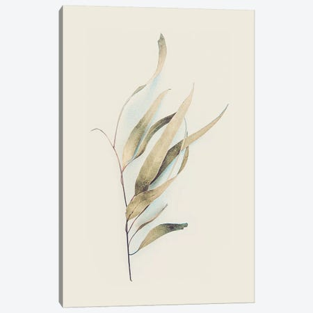 Gum Leaves Canvas Print #URE89} by Urban Epiphany Canvas Art