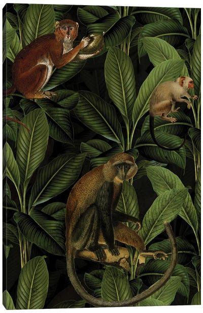Vintage Monkey Jungle Canvas Art Print