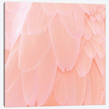 Blush Feathers Canvas Print #UTA57} by UtArt Canvas Art