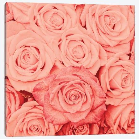 Coral Real Roses Canvas Print #UTA85} by UtArt Art Print