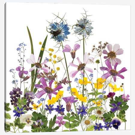 Dried And Pressed Midsummer Flowers Canvas Print #UTA92} by UtArt Art Print