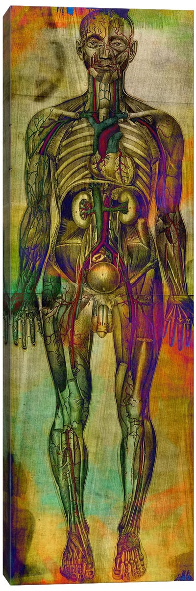 Human Anatomy Composition Canvas Art Print