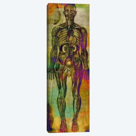 Human Anatomy Composition Canvas Print #UVP46} by Unknown Artist Canvas Print