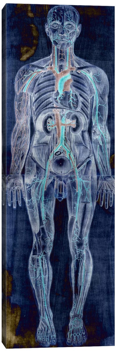 Human Anatomy Composition #2 Canvas Art Print