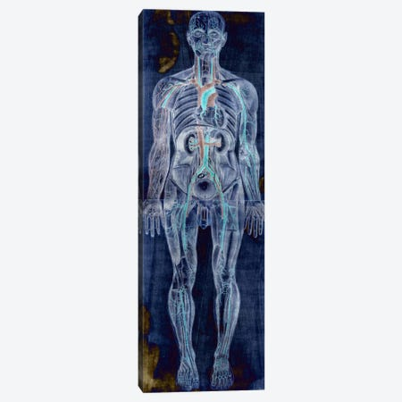 Human Anatomy Composition #2 Canvas Print #UVP46a} by Unknown Artist Canvas Wall Art