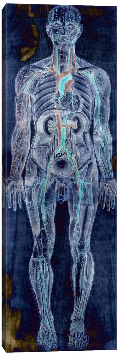 Human Anatomy Composition #2 Canvas Art Print