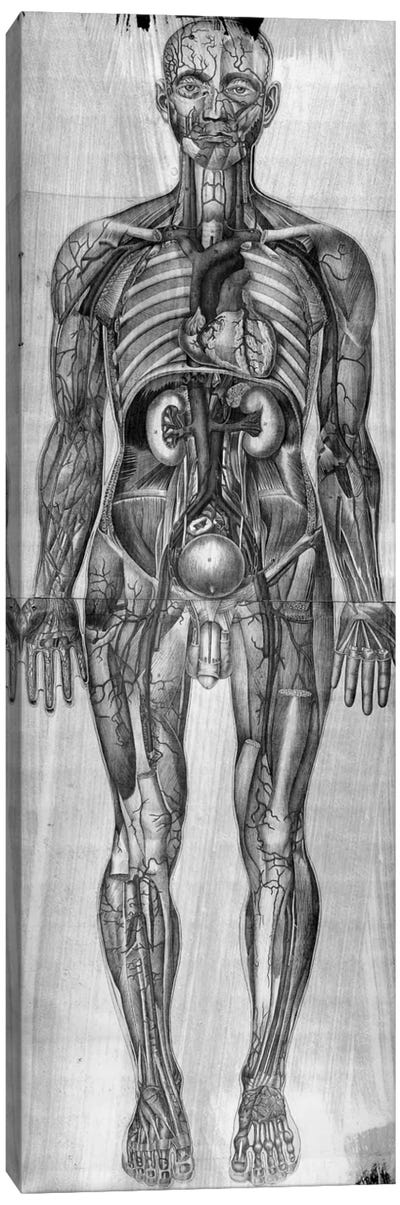 Human Anatomy Composition #3 Canvas Art Print