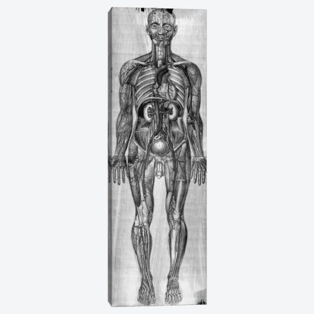 Human Anatomy Composition #3 Canvas Print #UVP46b} by Unknown Artist Canvas Wall Art