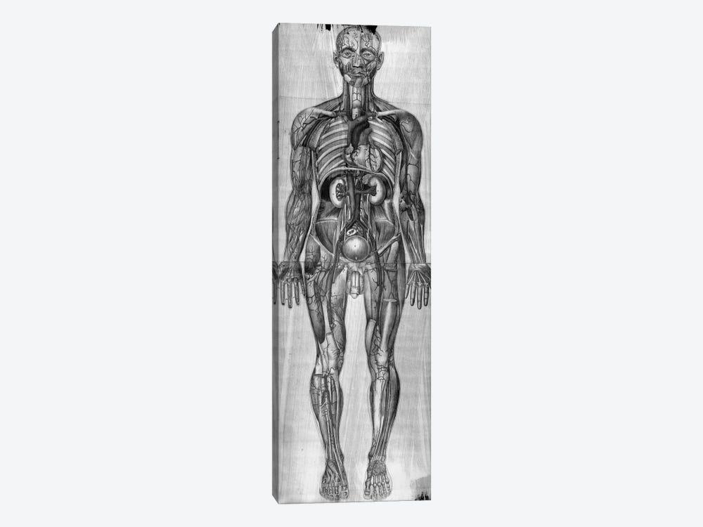 Human Anatomy Composition #3 by Unknown Artist 1-piece Canvas Art Print